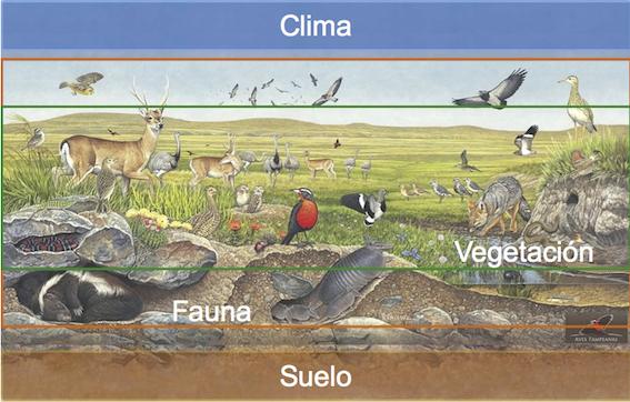 Biodiversidad, Biomas y Ecosistemas en la escuela No 5 de Punta del Este