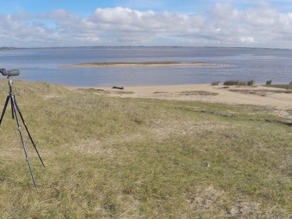 Uruguay: the South American birding oasis during the COVID-19 pandemic