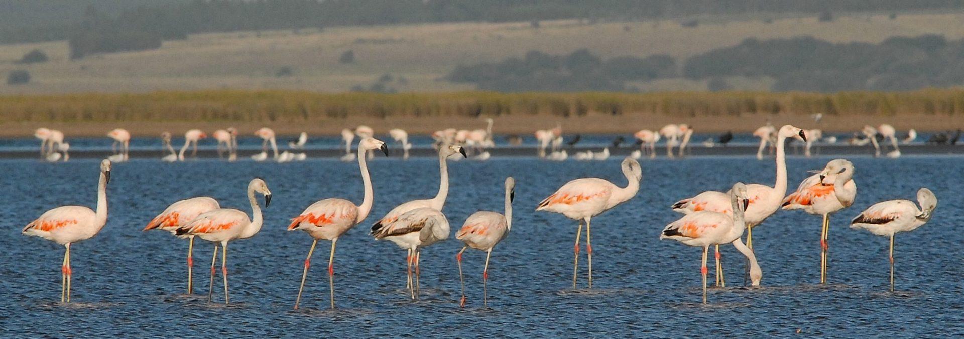 Turismo de Naturaleza: Laguna Garzón