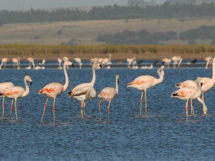 Programa Ecoturismo para la Conservación