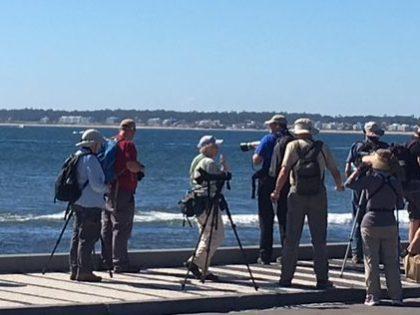 Birding Tours Punta del Este todo el año