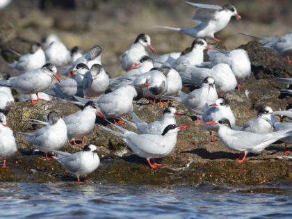 Birding: Observación de aves en Punta del Este y Costa Serrana