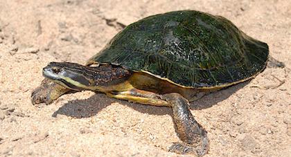 Dia Internacional de las Tortugas