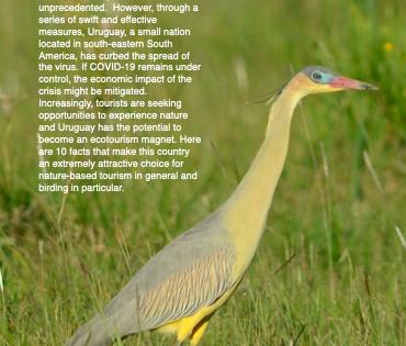 Uruguay: Oasis de observación de Aves en América del Sur