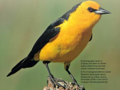 Ten Birding Hotspots – Uruguay